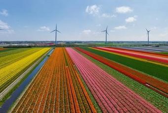 Holland_14